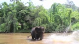 Elephant Juggling