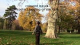 coloured leaves - contact juggling