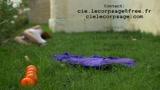 Compagnie Le Corps Sage - Le Poids de la Légèreté - Trailer
