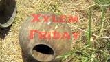 Xylem Friday