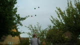rj7bc - 23/05/2009 - 39 catches